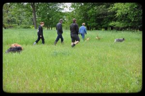 Dog hike in Naperville IL