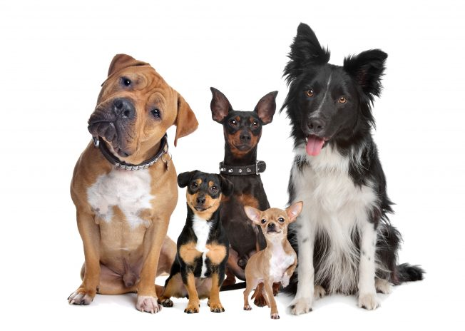 dog trainers in Roselle IL